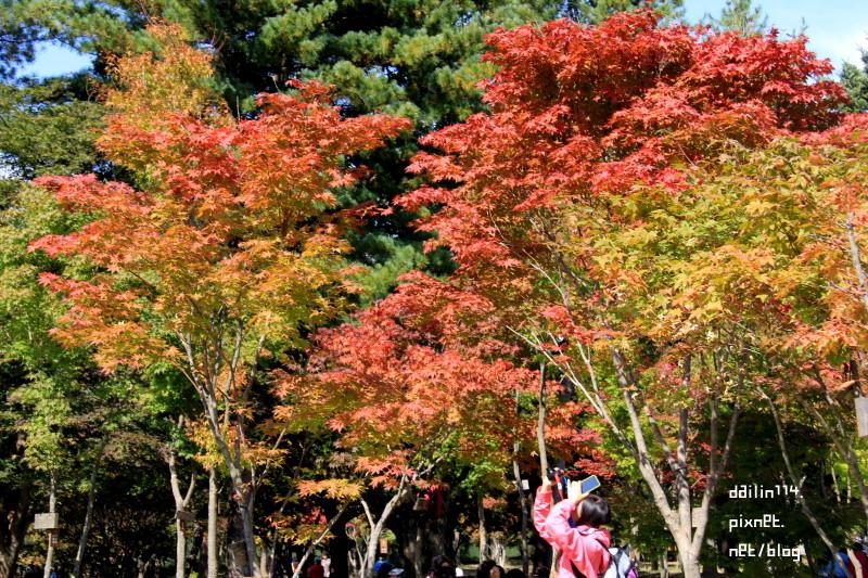【南怡島賞楓】韓國楓葉秋天也可戀歌|搭船+超適合外拍+10月初楓葉風景美照 @GINA LIN