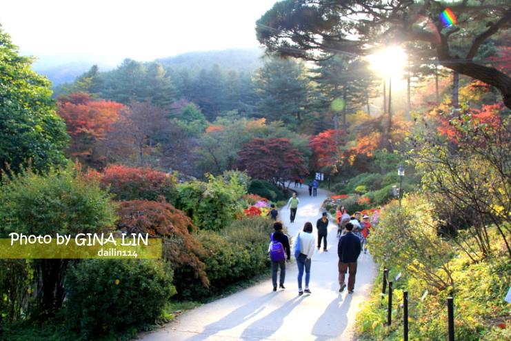 【京畿道景點】 晨靜樹木園,美到不行!韓劇信義、原來是美男MV、電影情書、朝鮮名偵探、韓綜《超人回來了》拍攝景點 @GINA環球旅行生活