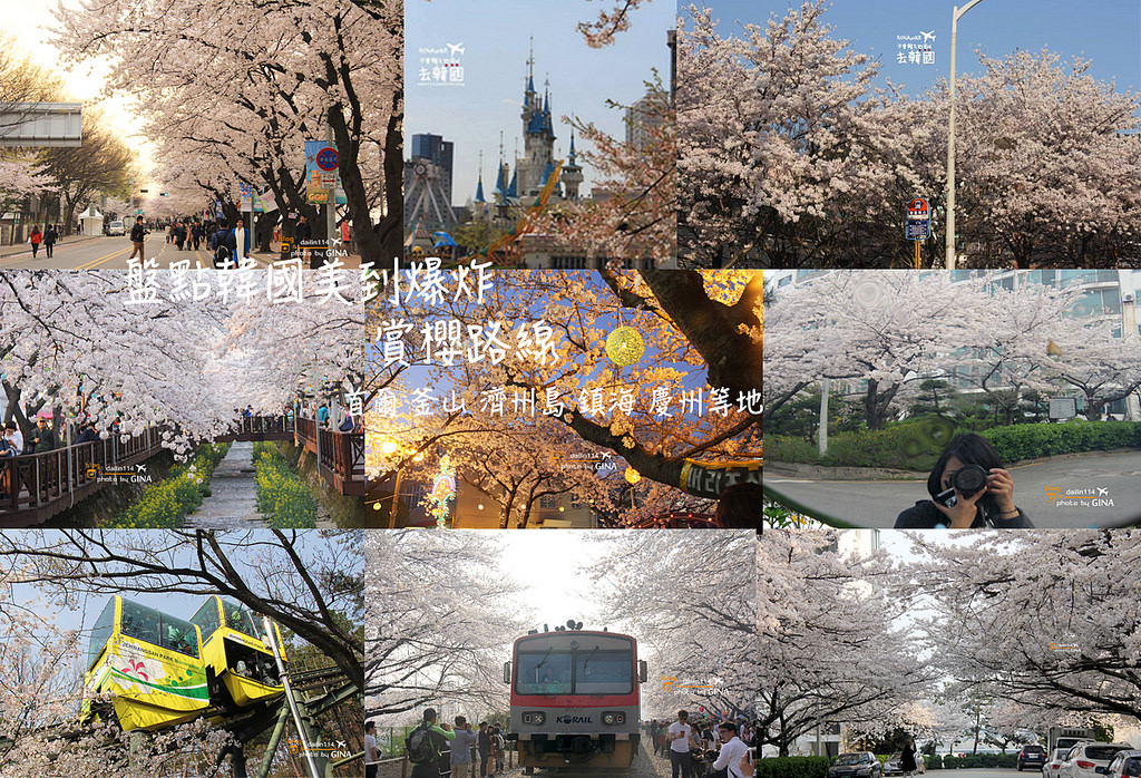 【韓國櫻花攻略】2021韓國櫻花季預測時間|首爾 釜山 大邱 濟州島|賞櫻一日團整理 @GINA環球旅行生活