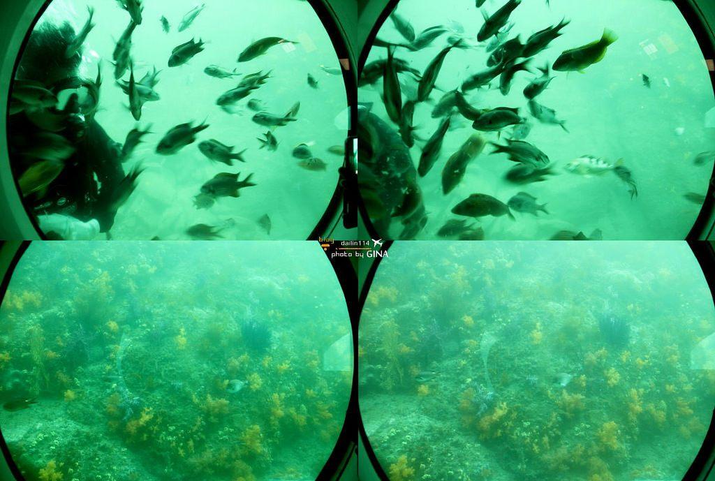 【西歸浦景點】濟州島搭潛水艦、 潛水艇|海底看魚冒險不用全身濕搭搭 @GINA環球旅行生活