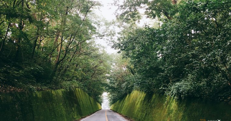 忠清北道》丹陽私房景點 - 丹陽苔蘚道路/苔蘚隧道 怎麼會這麼好拍!韓國人旅遊路線 (충청북도 단양 이끼터널) @Gina Lin