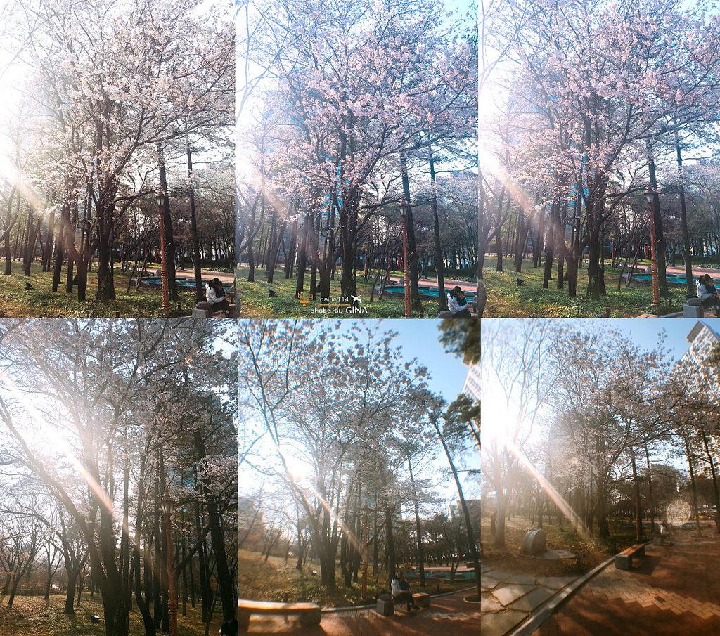 【大邱市區賞櫻】國債報償運動紀念公園(국채보상운동기념공원)+紀念館(近東城路)附交通地圖 @GINA環球旅行生活|不會韓文也可以去韓國