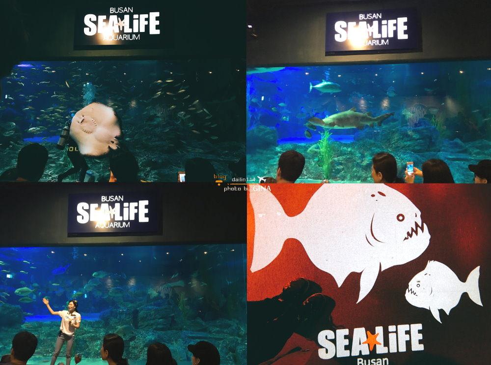 【釜山水族館】情侶親子景點| 韓國最大海底主題水族館|讓我回到童年 + 海雲台玩沙|從南浦、釜山站直達公車 @GINA環球旅行生活|不會韓文也可以去韓國 🇹🇼