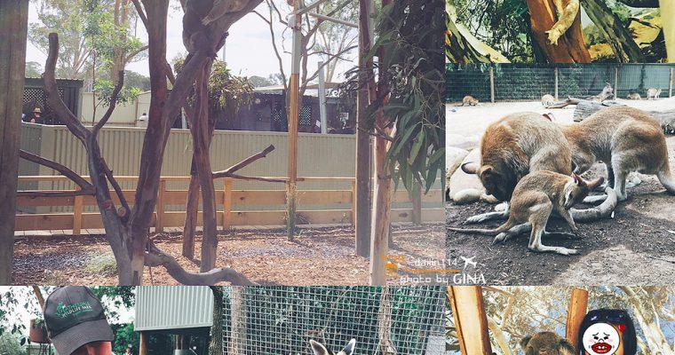 雪梨一日團》Featherdale 野生動物園 袋鼠、無尾熊一次滿足(可以免費跟無尾熊拍照哦!) @Gina Lin
