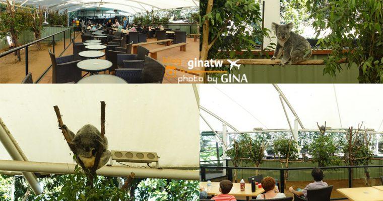 澳洲布里斯本自由行》布里斯本看無尾熊去!龍柏動物園(Lone Pine Koala Sanctuary)邊看無尾熊邊野餐 @Gina Lin