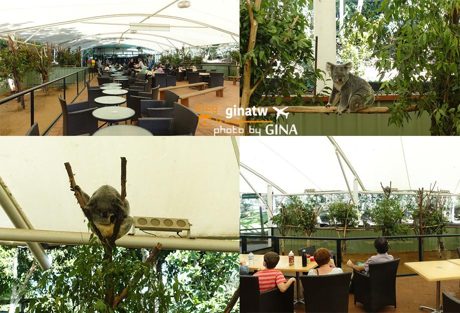 【布里斯本自由行】龍柏動物園門票優惠|抱無尾熊、澳洲袋鼠|Lone Pine Koala Sanctuary|澳洲景點、野餐! @GINA環球旅行生活
