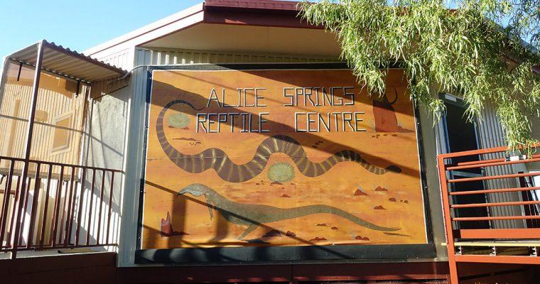 澳洲北領地》愛麗斯泉爬行動物中心(Alice Springs Reptile Centre) @Gina Lin