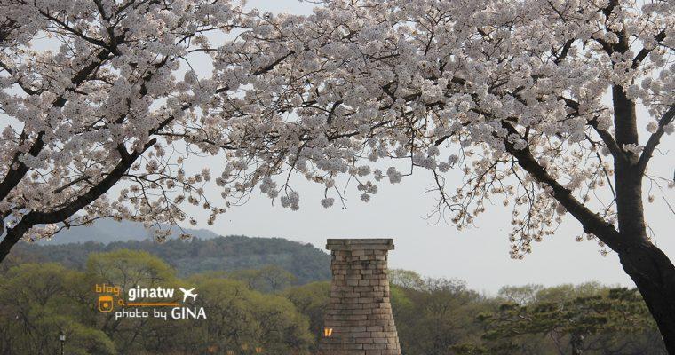 韓國慶州賞櫻》慶州整個城市都是櫻花大道美到不行!推薦韓國賞櫻必來!! @Gina Lin