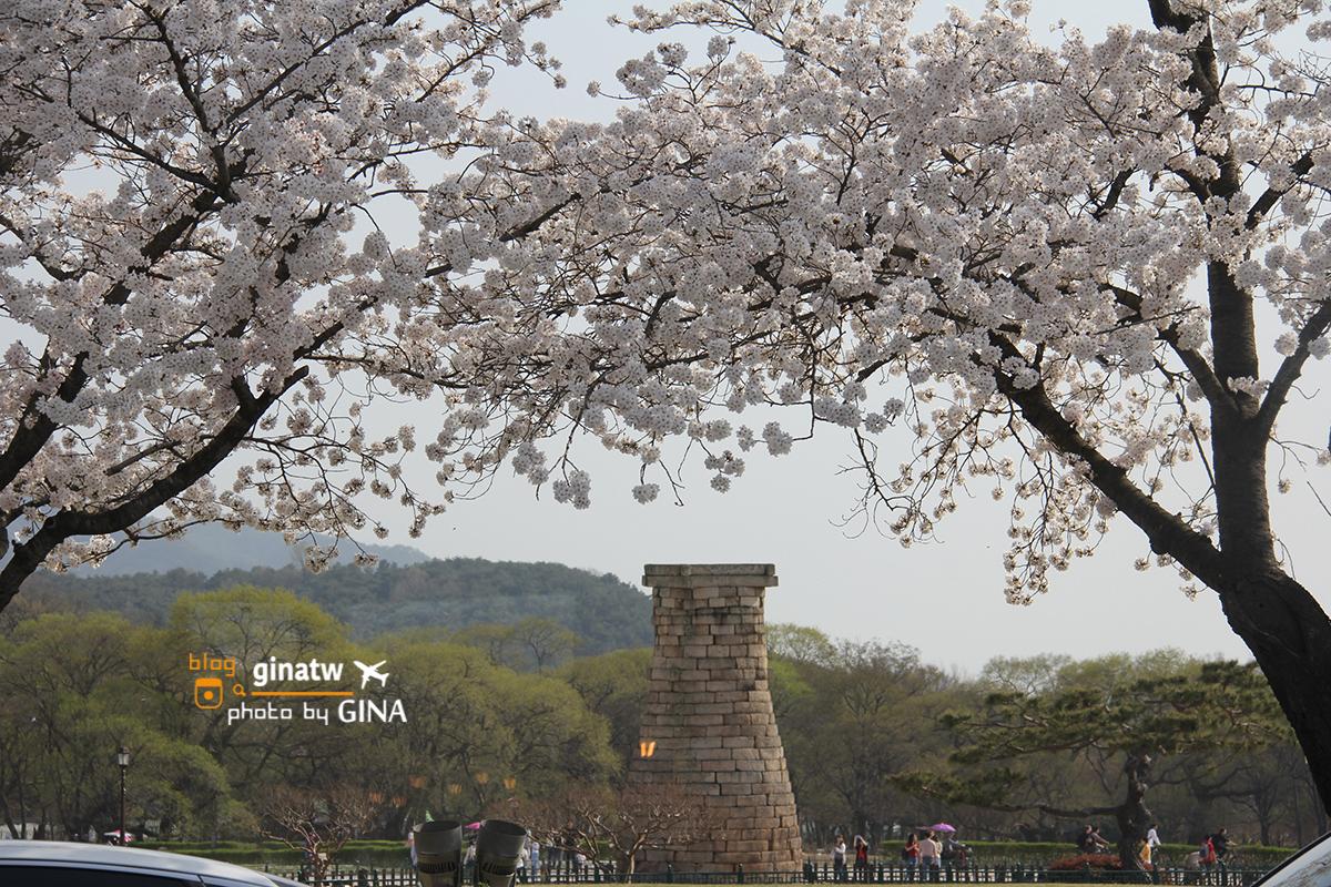 【慶州賞櫻】韓國櫻花必去!整個城市都是-櫻花大道美到不行!推薦追櫻必來!! @GINA環球旅行生活
