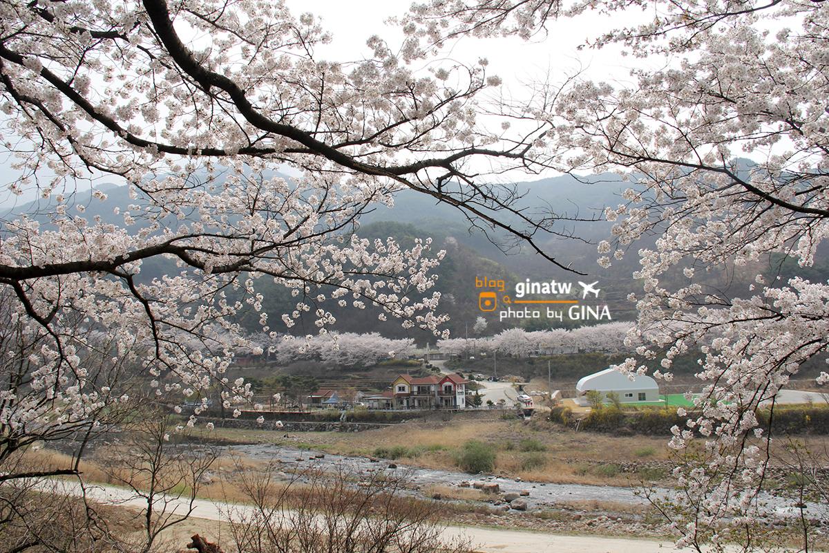 【2020河東十里櫻花路】 韓國釜山|賞櫻必去一日遊|洛東江大渚生態公園一帶美美夜櫻 @GINA環球旅行生活