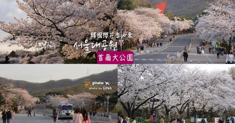 2020韓國賞櫻 果川市 首爾大公園(서울대공원)滿滿的櫻花路拍到沒人跟你搶! @Gina Lin
