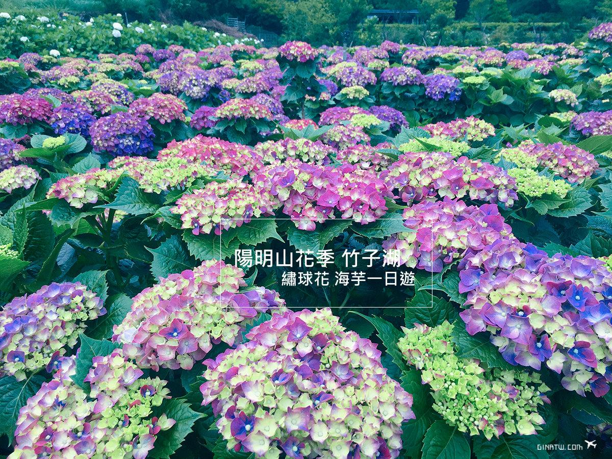【2020陽明山繡球花】台北花季時間、海芋一日遊|竹子湖地圖攻略下載|交通方式、門票入場費 @GINA環球旅行生活