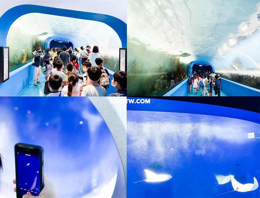 【Xpark水族館門票優惠】2021桃園青埔最新景點-都會型水生公園|KKDAY、KLOOK線上票卷 @GINA環球旅行生活