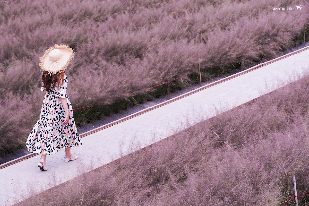 【南投景點】粉黛亂子草台灣-和平社區花園、田園預約|9-11月季節限定|集集粉紅亂子草 @GINA環球旅行生活|不會韓文也可以去韓國 🇹🇼