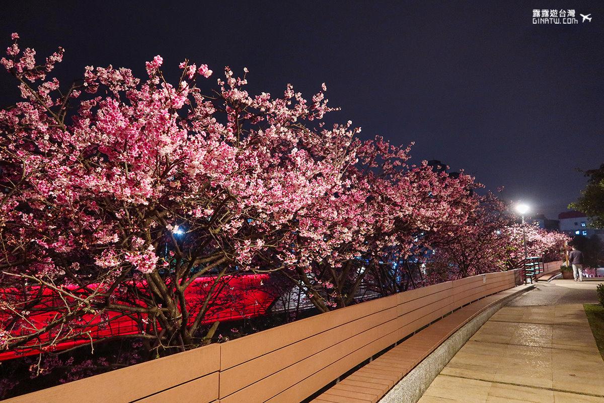 【內湖櫻花】2021樂活公園夜櫻季|台灣賞櫻景點|台北捷運東湖站 @GINA環球旅行生活