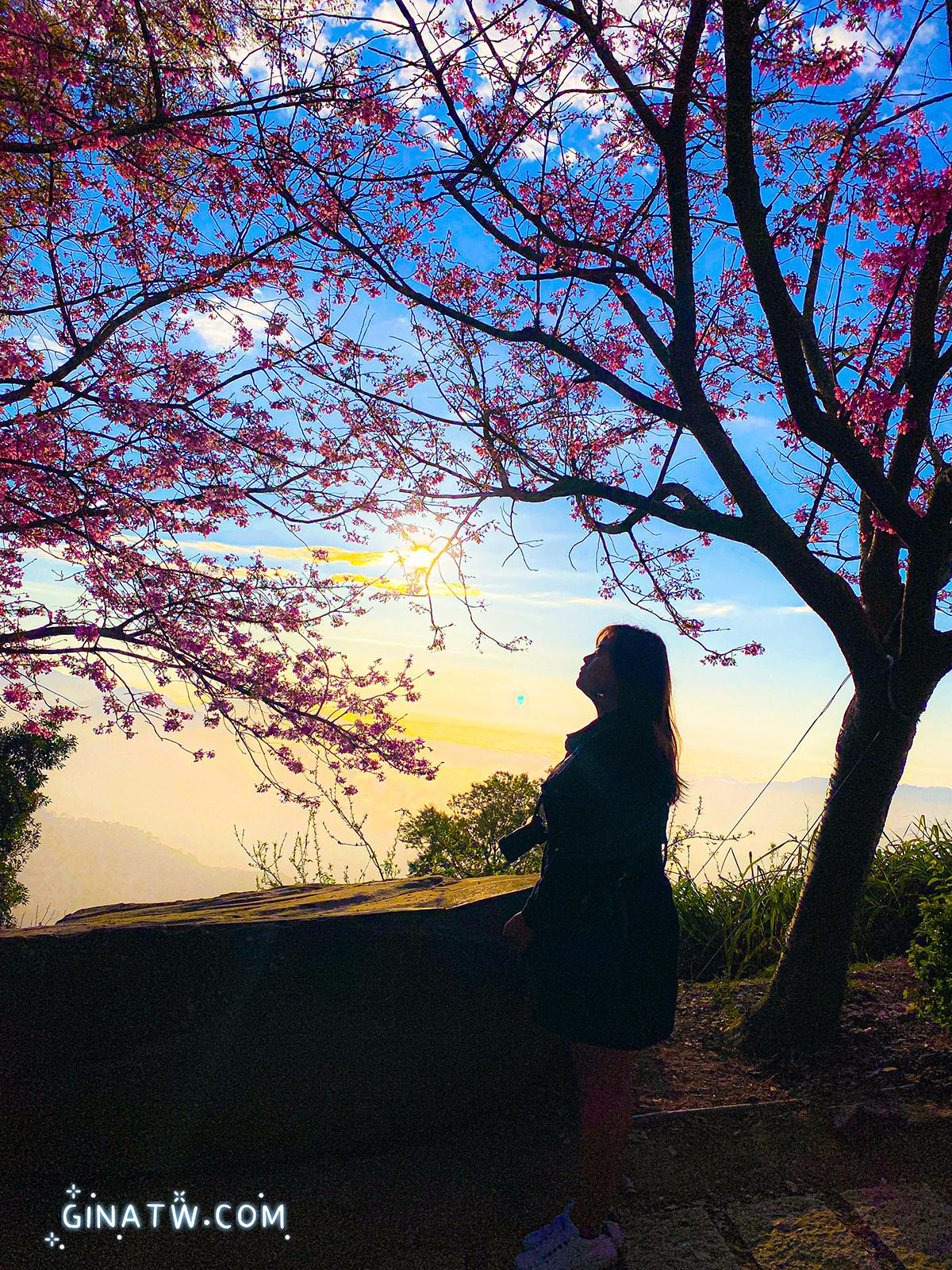 【2021苗栗一日遊】蓮臺山櫻花|大湖採草莓|協雲宮櫻花掉光光 @GINA環球旅行生活